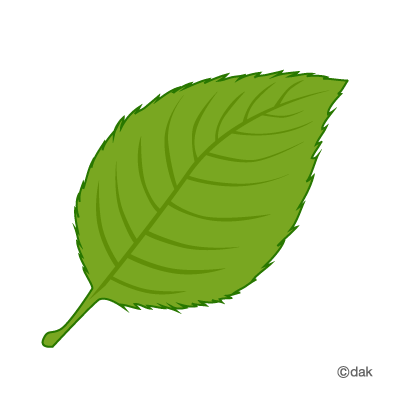 Green Leave|Pictures of clipart and graphic design and illustration ...