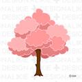 Free Cherry tree