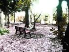 木の葉とベンチ