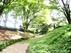 小道の木漏れ日